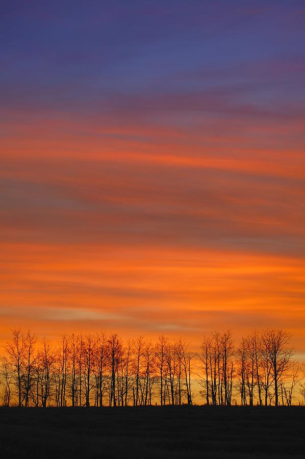 Silhouette Of Trees Against Sunset Photograph