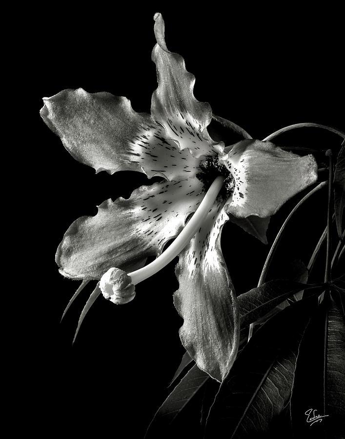 Flower Prints Black And White Black And White Flower Print