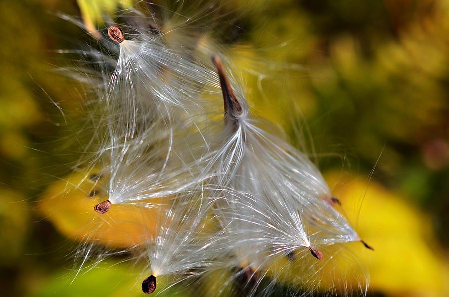 Silky Autumn Photograph