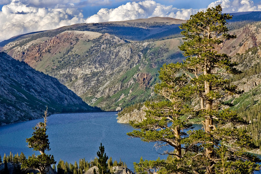 Silver Lake Pines Photograph