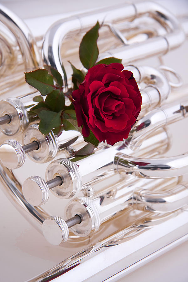 Silver Tuba With Red Rose On White Photograph  - Silver Tuba With Red Rose On White Fine Art Print