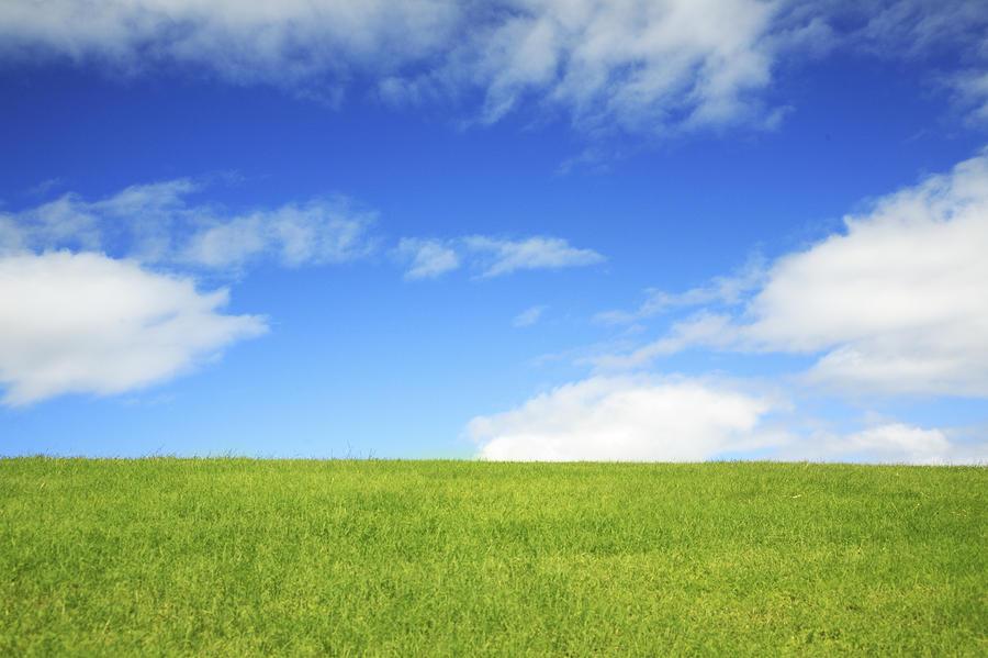 Simple Grassy Landscape By Brandon Tabiolo