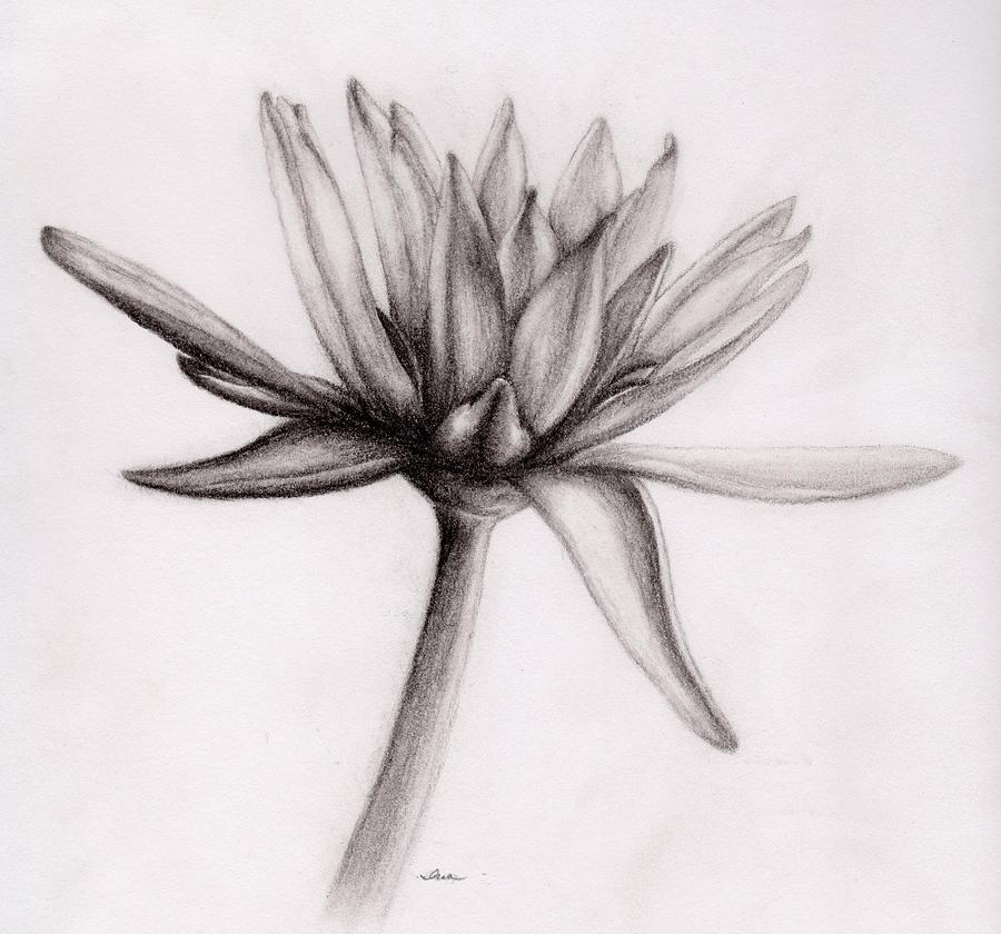 Gallery For gt Simple Art Drawings