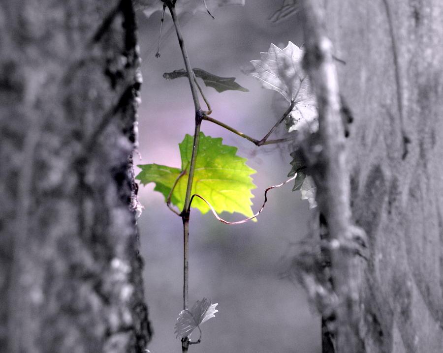 Simplicity Photograph
