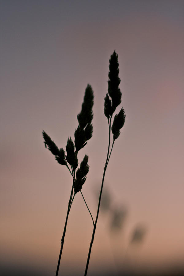 Simplistic Beauty Photograph