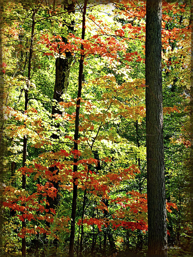 Simply Autumn Digital Art  - Simply Autumn Fine Art Print