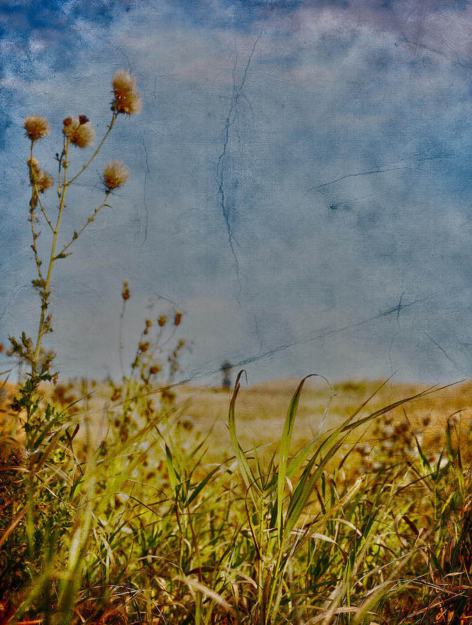 Singing In The Grass Photograph  - Singing In The Grass Fine Art Print