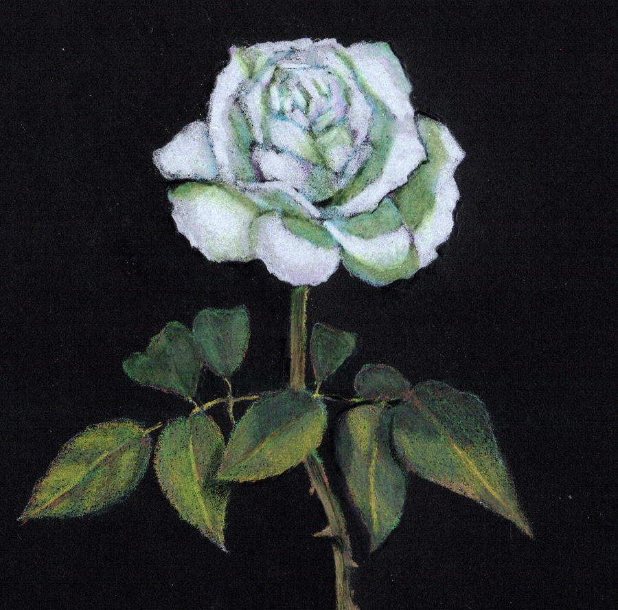 Single White Rose Drawing...
