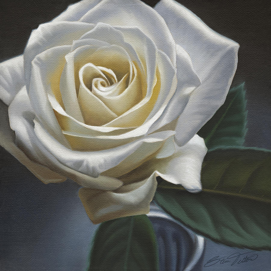 Single White Rose Painting by Steven Tetlow