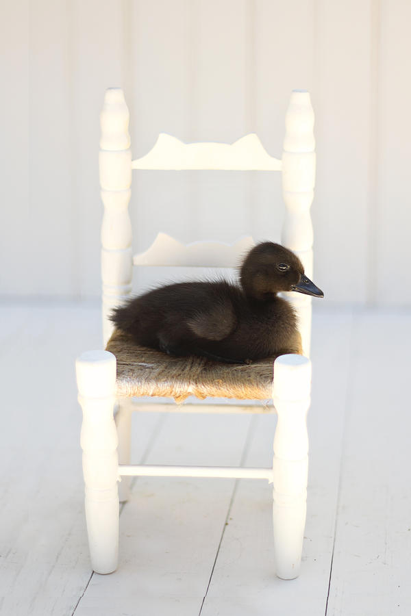 Sitting Duck Photograph