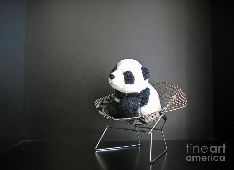 Sitting Meditation. Floyd From Travelling Pandas Series. Photograph