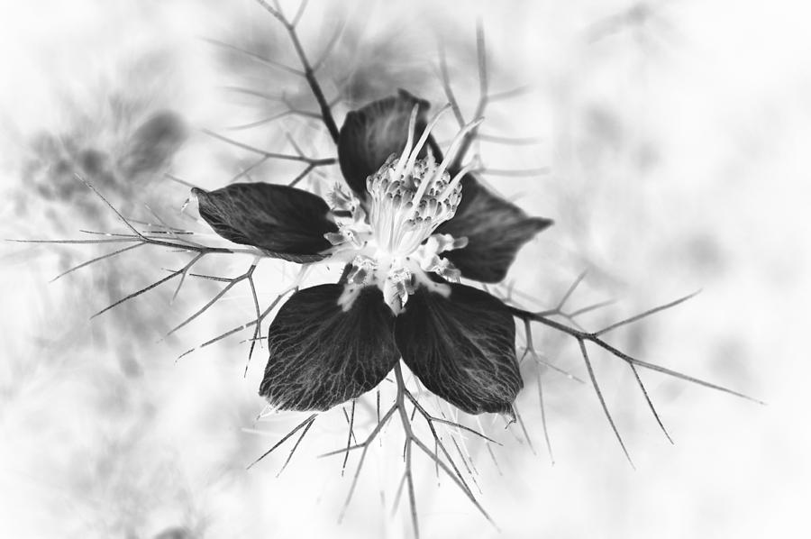 Skeleton Flower Photograph  - Skeleton Flower Fine Art Print