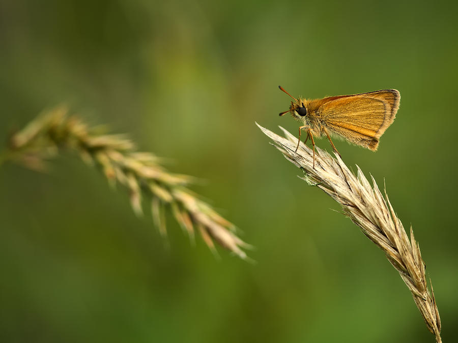 Skipper Photograph