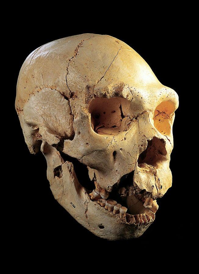 Skull 5, Sima De Los Huesos Photograph