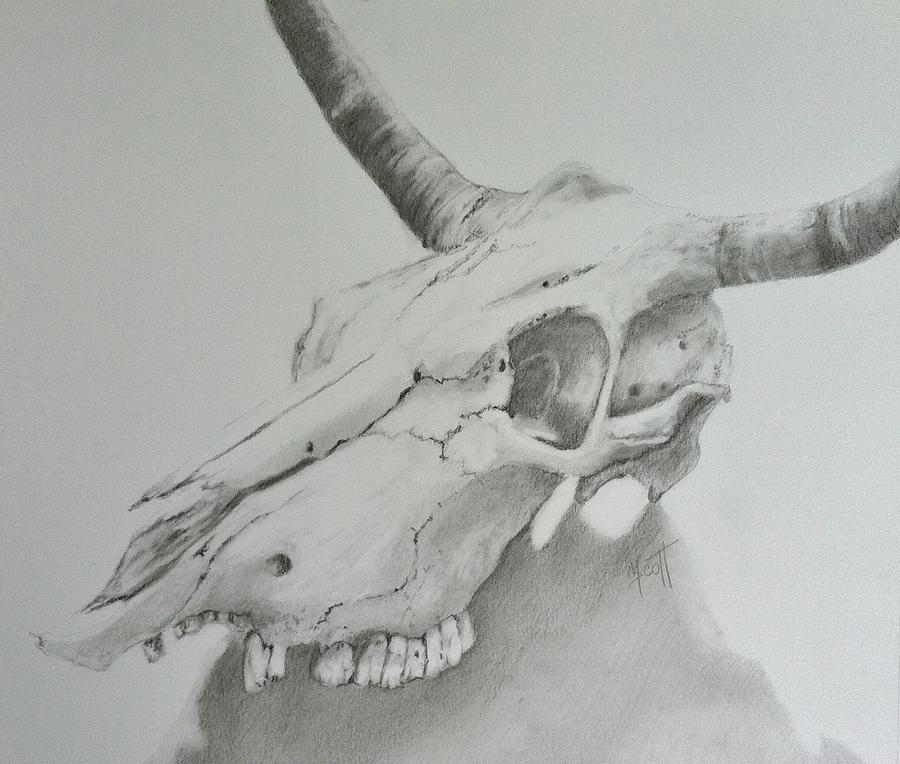 cow skull drawing wwwimgkidcom the image kid has it