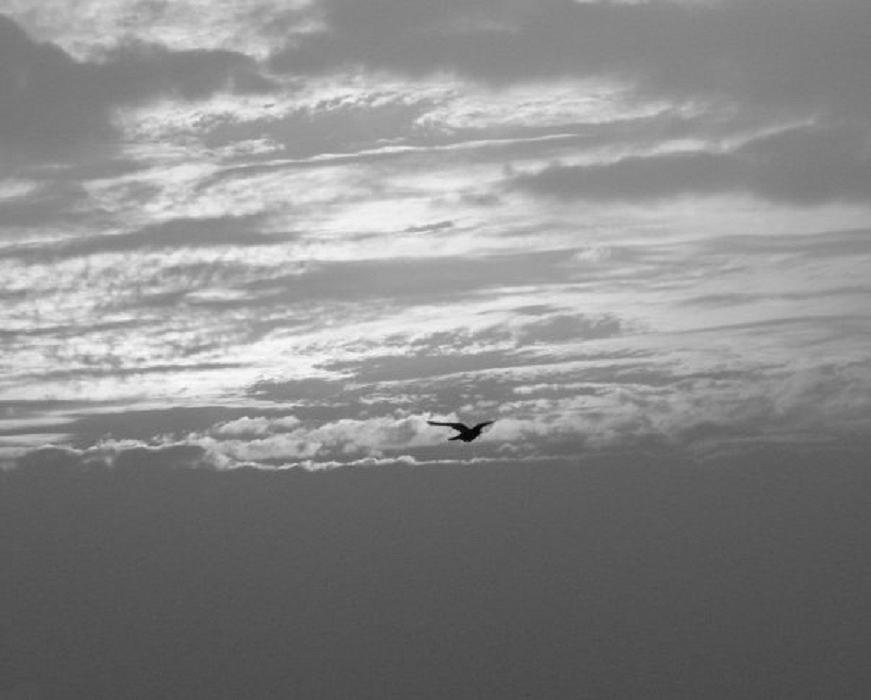 Photograph - Sky High by Prashant Ambastha