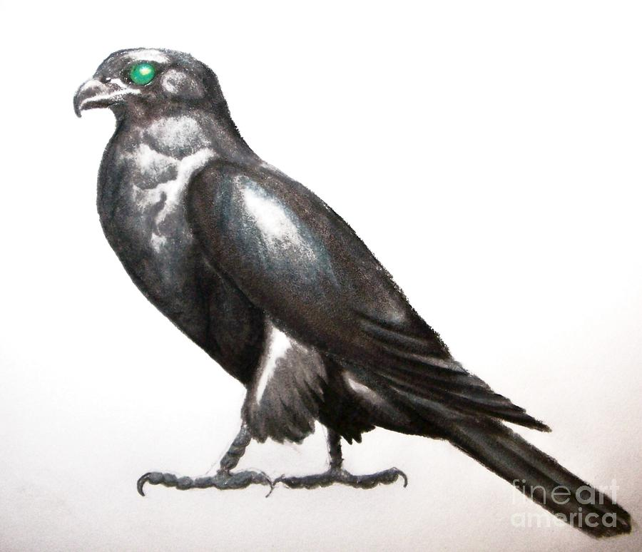 Slate Falcon Drawing  - Slate Falcon Fine Art Print
