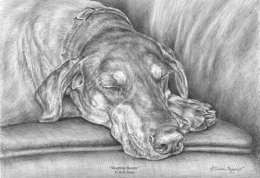 Sleeping Beauty - Doberman Pinscher Dog Art Print Drawing