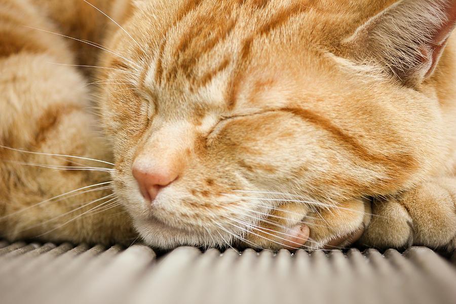 kitten_ginger