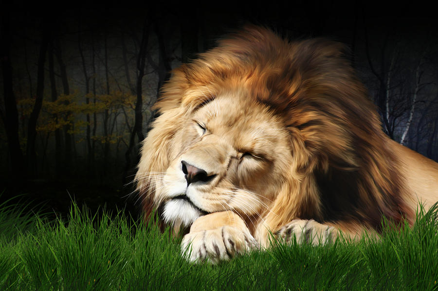 Sleeping Lion Digital Art  - Sleeping Lion Fine Art Print