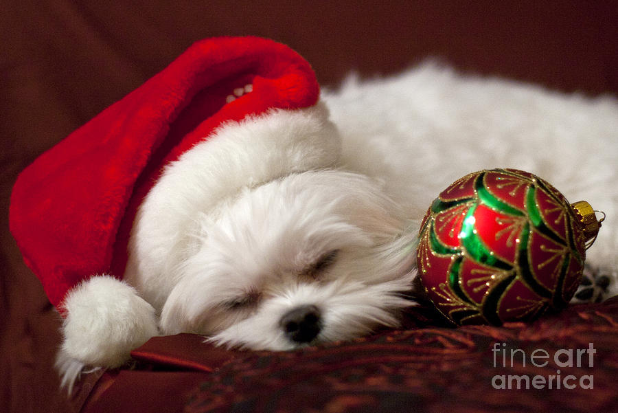 Sleepy Time Photograph  - Sleepy Time Fine Art Print