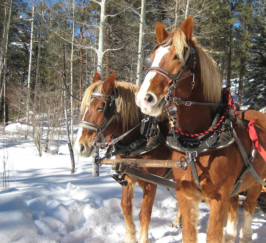 Sleigh Ride Photograph  - Sleigh Ride Fine Art Print