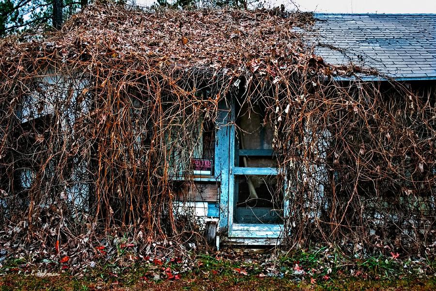 Slightly Overgrown Photograph