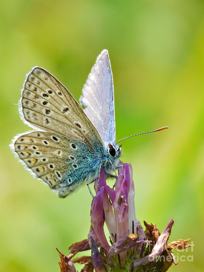 Butterfly Photograph - Little Butterfly by Angela Doelling AD DESIGN Photo and PhotoArt