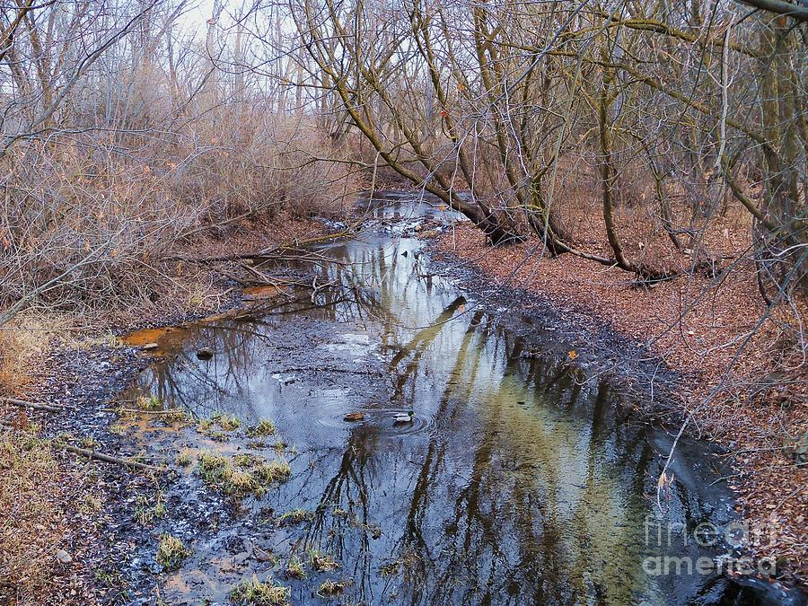 Small Creek In Dry Winter - Scenic Idaho Photograph  - Small Creek In Dry Winter - Scenic Idaho Fine Art Print