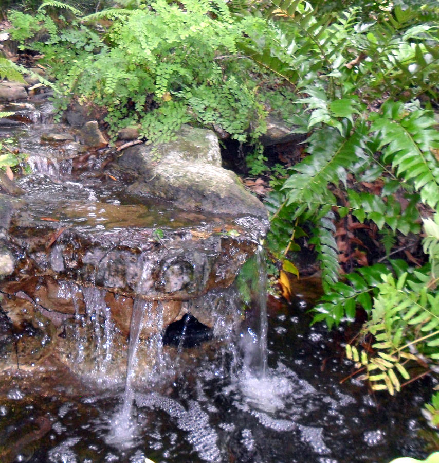 Small Garden Waterfall By Sheri Mcleroy