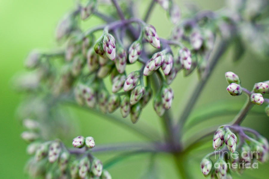 Weed Photograph - Small World by Lois Bryan