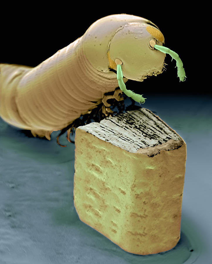 Smallest Book And Millipede, Sem Photograph