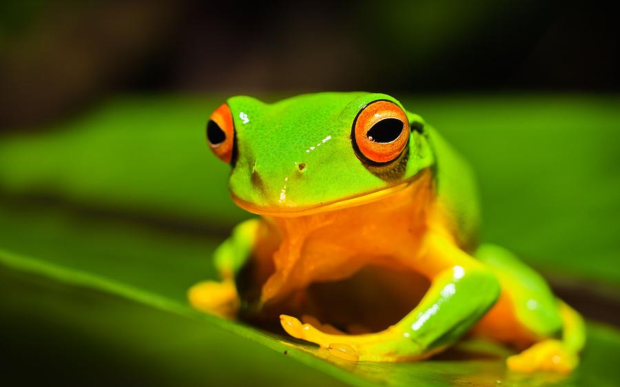 Smiling Frog Photograph