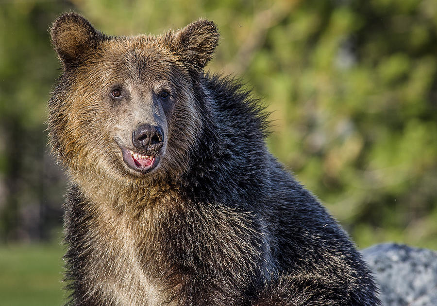 Bear Qigong Bear Frolics Chi Kung Bibliography Lessons