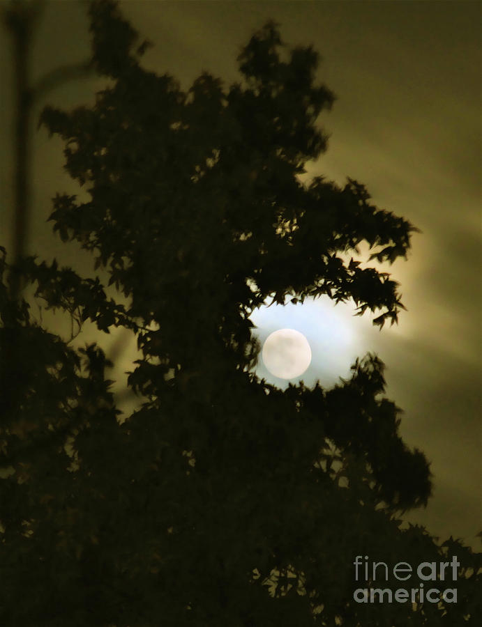 Smoke Dragon Tree Swallows Moon Photograph