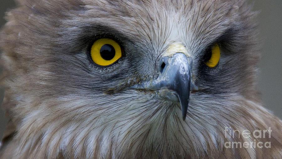 Snake Eagle 2 Photograph