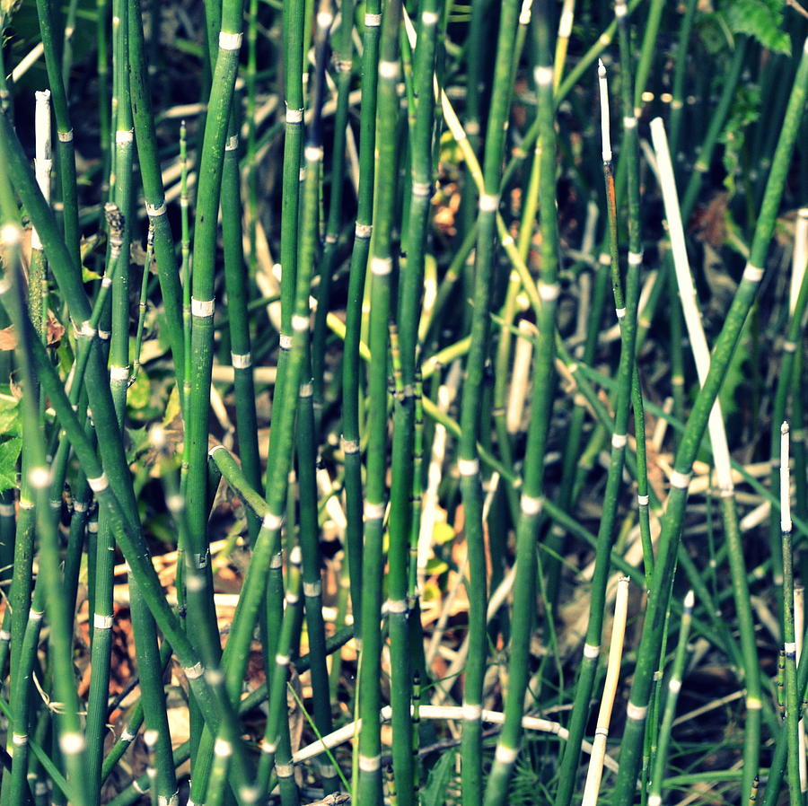 Snake Grass On The Beach Photograph  - Snake Grass On The Beach Fine Art Print