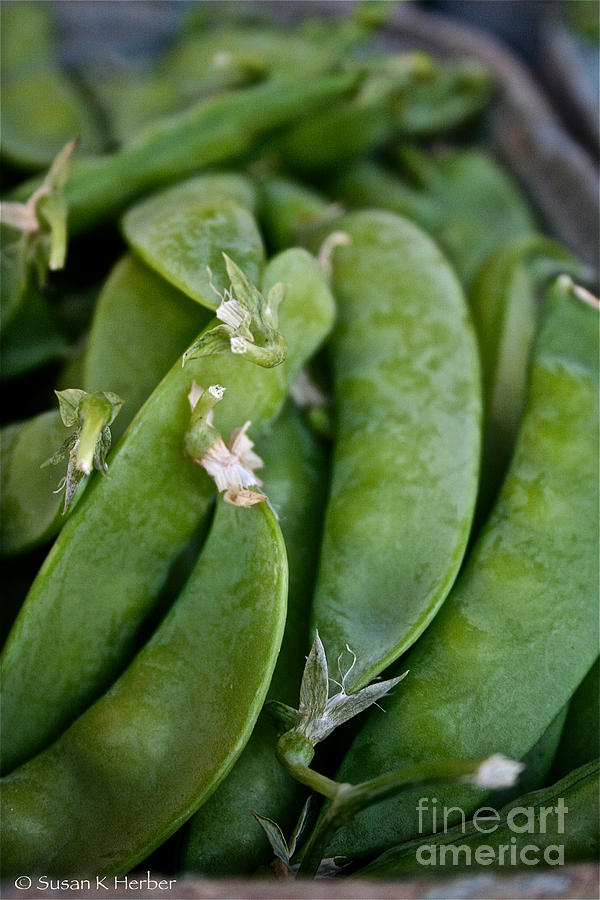 Food Photograph - Snap Peas Please by Susan Herber