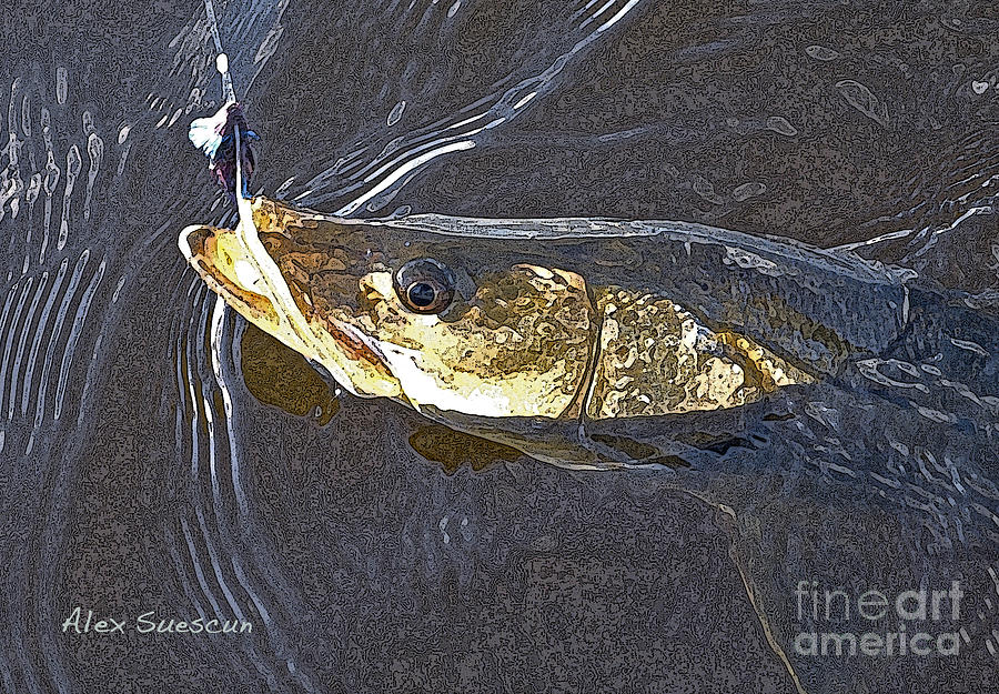 Snook Slider Painting  - Snook Slider Fine Art Print