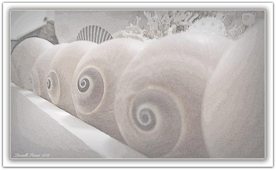 Seashell Framed Prints Photograph - Snow Babies by Danielle  Parent