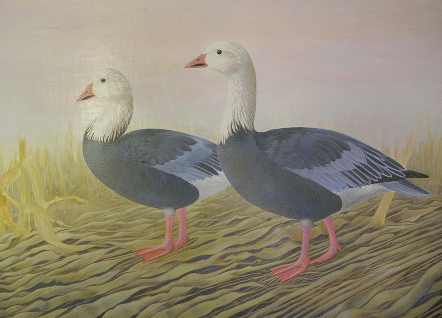 Snow Geese Painting - Snow Geese by Alan Suliber