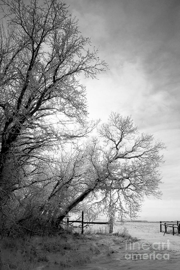 Snow Lace Photograph
