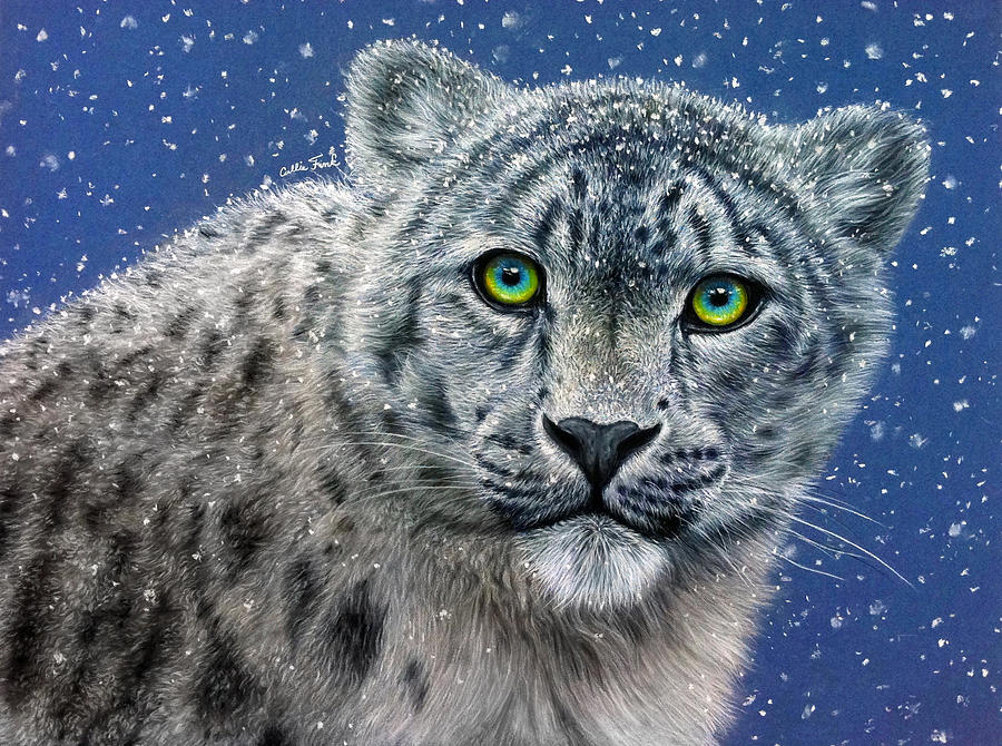 Snow Leopard Drawing  - Snow Leopard Fine Art Print