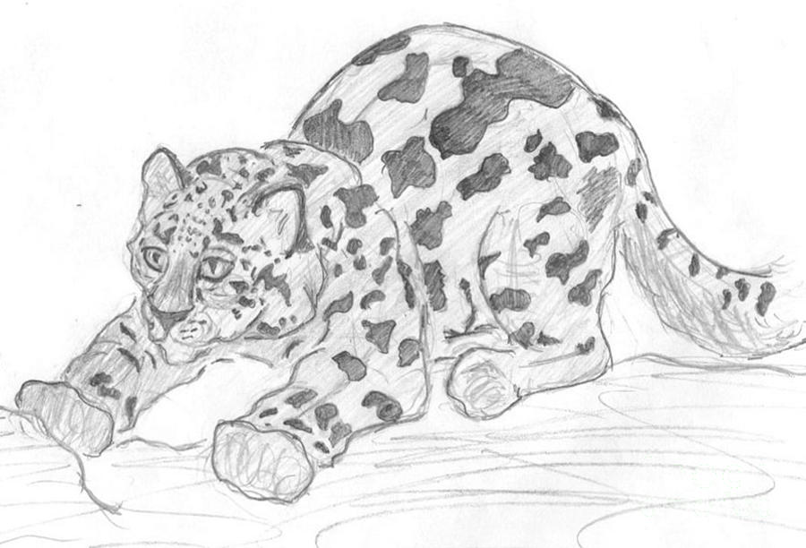 Snow leopard drawing - photo#13