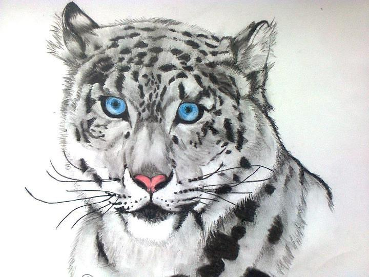 Snow leopard drawing - photo#15