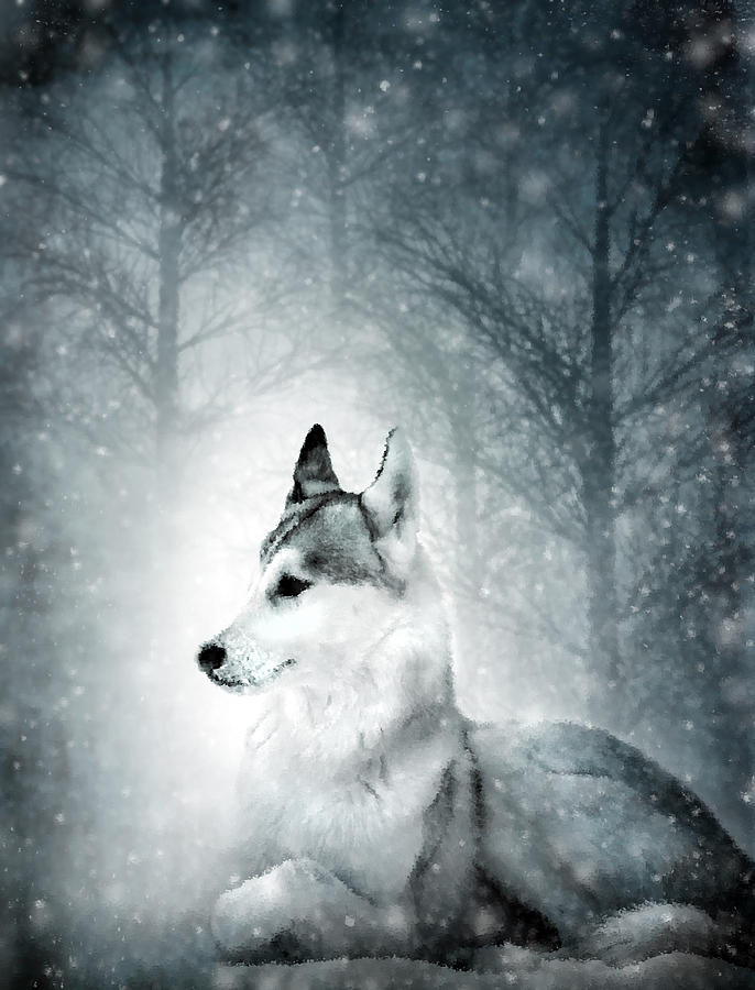 Snow Wolf Digital Art  - Snow Wolf Fine Art Print