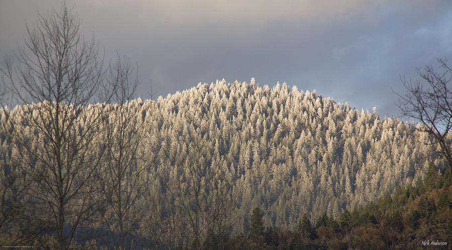 Snowlight Photograph