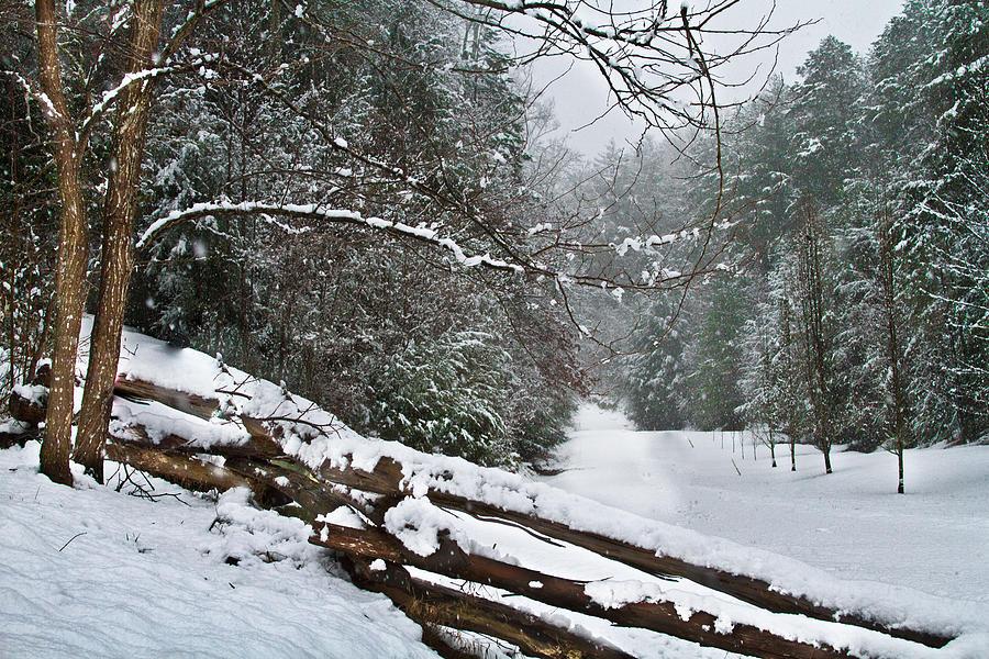 Snowy Fence Photograph