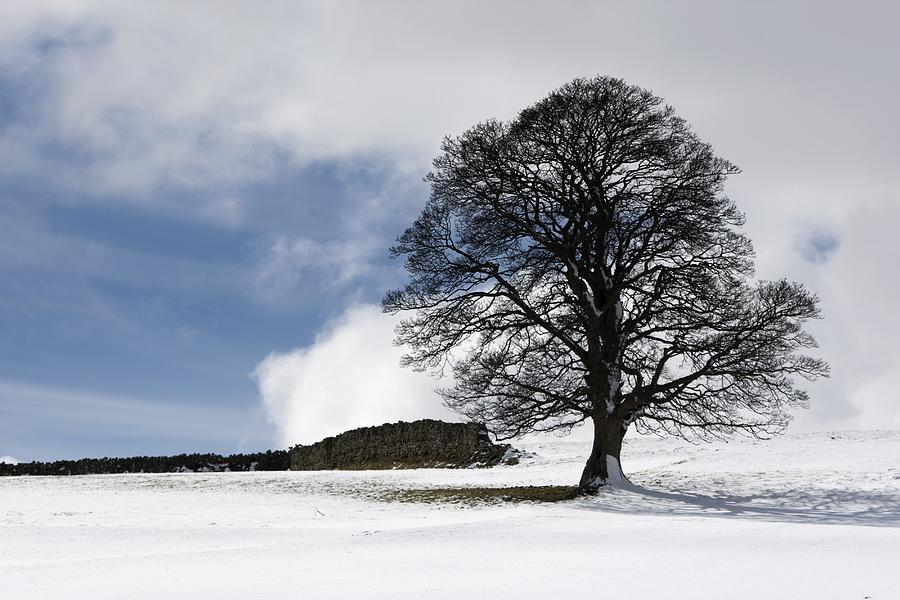 Snowy Field And Tree Photograph