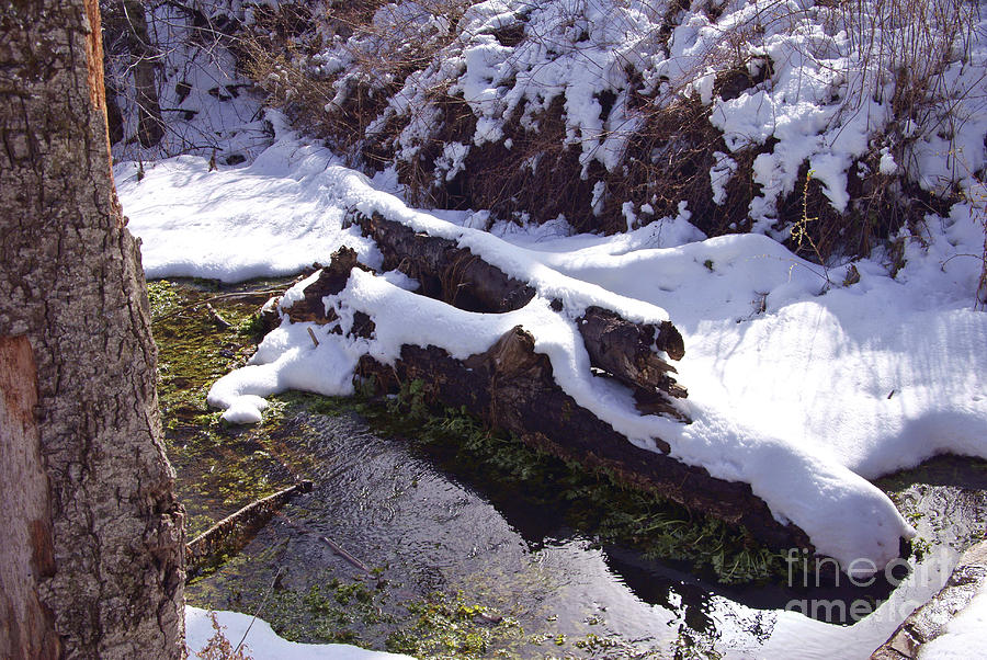 Cuyamaca Photograph - Snowy Stream by Virginia Hagerty